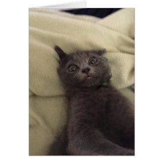 Cartão vazio do gato bonito louco