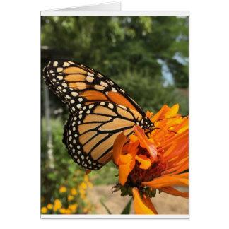 cartão vazio do monarca