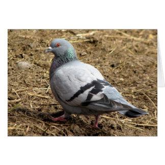 Cartão vazio do pombo