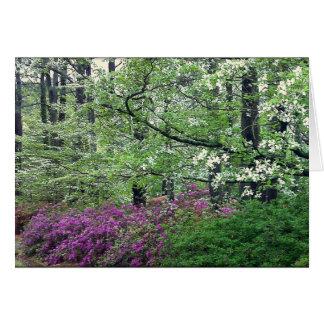 Cartão vazio do primavera do Tidewater