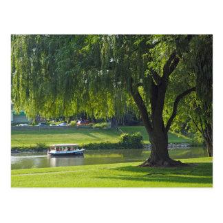 Cartão vazio do rio 190 do salgueiro