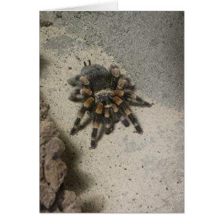 Cartão vazio do Tarantula