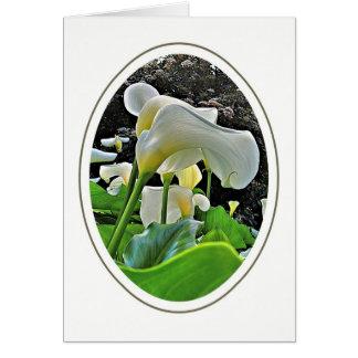 Cartão vazio dos lírios de Arum