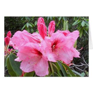 Cartão vazio dos rododendros cor-de-rosa