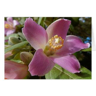 Cartão vazio - flor da árvore da pirâmide