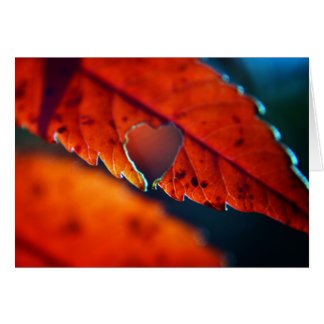 Cartão vazio - folhagem de outono