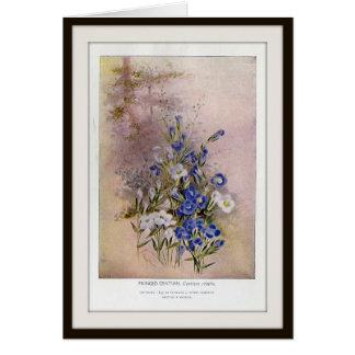 Cartão vazio franjado do Wildflower botânico da