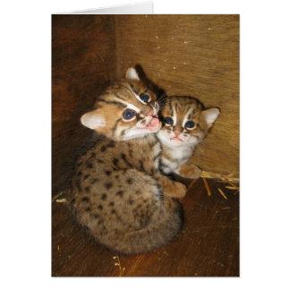 Cartão vazio - gato manchado oxidado