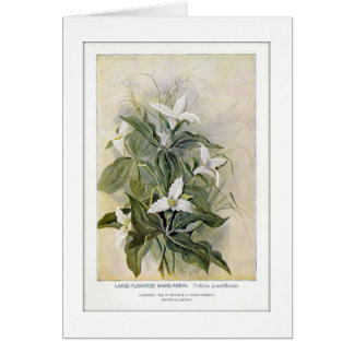Cartão vazio Grande-Florescido do Wildflower do