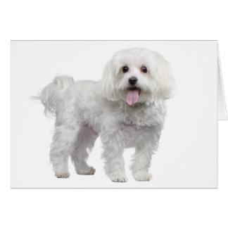 Cartão Vazio maltês branco Notecard/cartão do cão de
