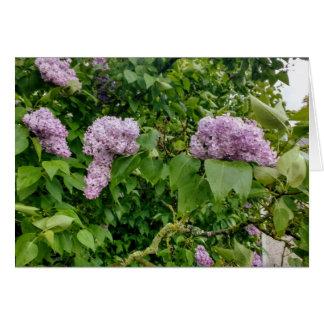Cartão vazio que caracteriza a imagem dos lilacs