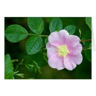Cartão Vazio selvagem do rosa cor-de-rosa