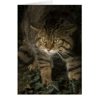 Cartão vazio - wildcat escocês 2
