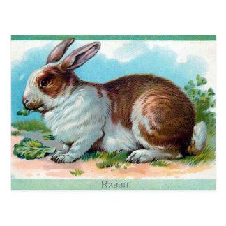 Cartão velho - coelho