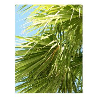 Cartão ventoso da palma