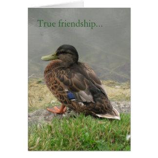 Cartão verdadeiro da amizade do pato