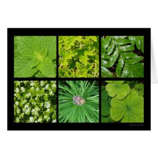 Cartão verde da folha