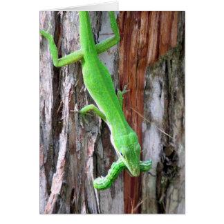 Cartão verde de Anole (lagarto)