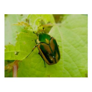 Cartão verde do besouro de junho cartão postal