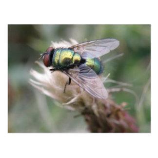 Cartão verde do macro da mosca da garrafa