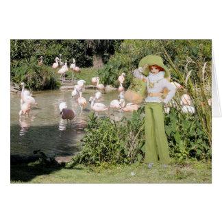 Cartão Verdi, flamingos no jardim zoológico de Houston