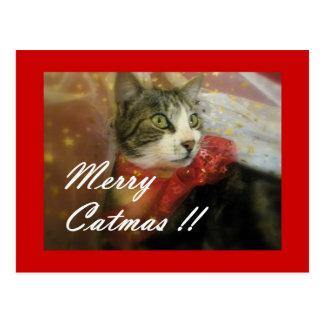 Cartão vermelho bonito do Natal do gato