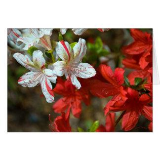 Cartão Vermelho, branco e bonito