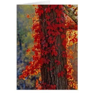 Cartão Vermelho brilhante do Creeper de Virgínia no
