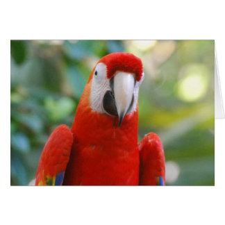 Cartão vermelho brilhante do papagaio