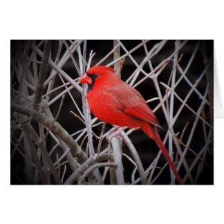 Cartão Vermelho cardinal masculino - pássaro