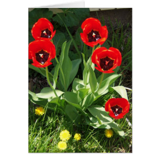 Cartão Vermelho com tulipas pretas, dia da luz do sol