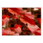 Cartão vermelho da fotografia da natureza das folh