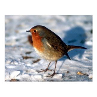 Cartão vermelho do pássaro do pisco de peito