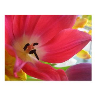 Cartão vermelho romântico da tulipa cartão postal