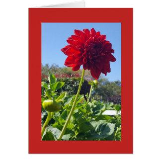 Cartão vermelho vibrante do Zinnia