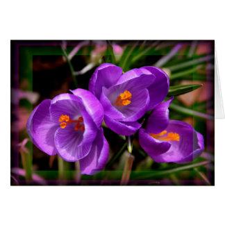 Cartão [Vernus do açafrão das flores coloridas] - alguma