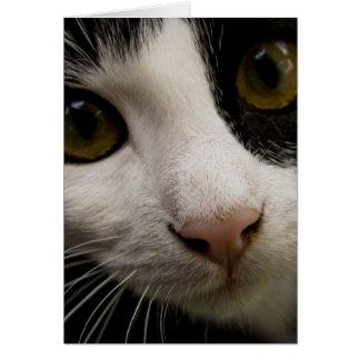 Cartão vertical: Mickey o gato