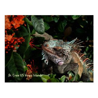 Cartão vibrante da iguana, E.U. Virgin Islands