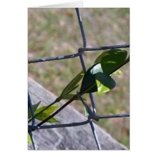 Cartão videira em uma cerca do elo de corrente - a vida