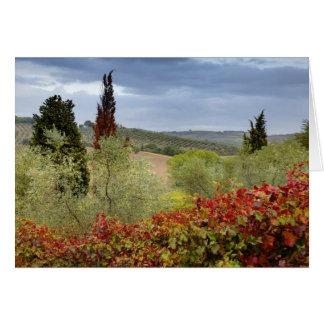 Cartão Vinhedo perto de Montalcino, Toscânia, Italia