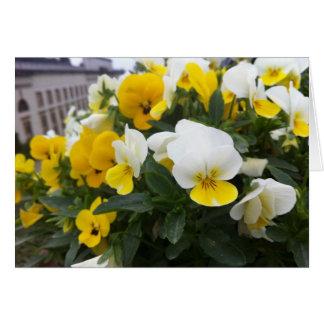Cartão Violas no jardim de Casa de campo di Poggio um