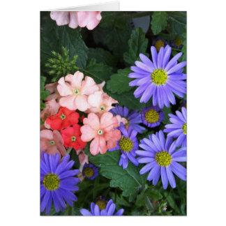 Cartão Violeta, azul, cor-de-rosa e coral floresce o