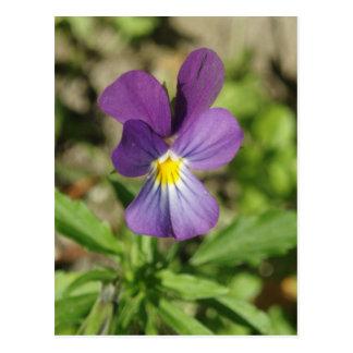 Cartão violeta bonito da foto da flor