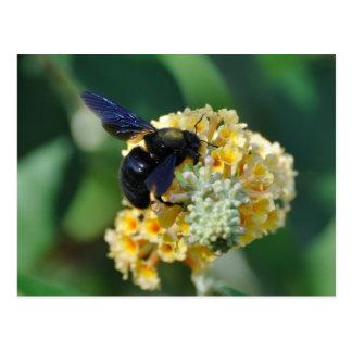 Cartão violeta da abelha de carpinteiro