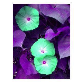 Cartão violeta da corriola do Aqua N