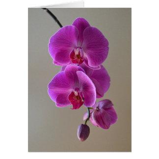 Cartão violeta da orquídea do Phalaenopsis