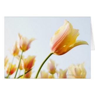 Cartão vista acima nas tulipas que crescem em um jardim
