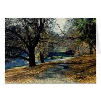 Cartão Vista através do bosque da faia