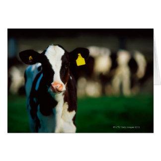 Cartão Vitela do Holstein-Frisão