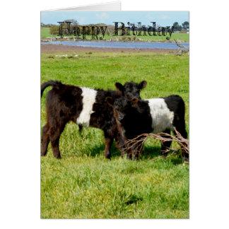 Cartão Vitelas cercadas do bebê de Galloway, aniversário